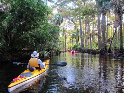 Photo for Secluded Waterfront  Estate with Kayaks free to guests, Bird Watchers dream