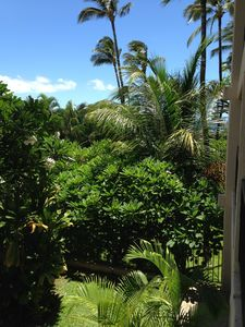 View from lanai.  The palm in front makes the ocean view a peek-a-boo view