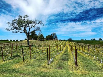 Photo for Vineyard property sleeps 6 on 23 acres, 2 miles from Downtown Paso Robles