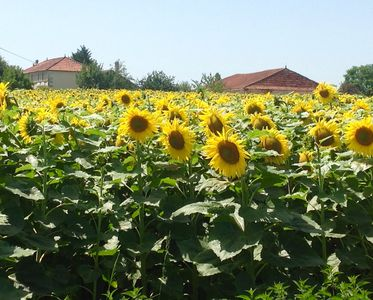 Photo for Peaceful gite amid the sunflower fields and vineyards.