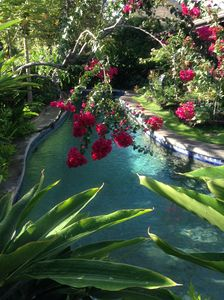 Take a morning dip under an arc of bougainvillea in our tropical pool garden.