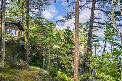 The home is surrounded by wild forest making the setting all the more dramatic.