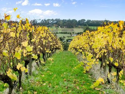 Photo for Bayview Estate - amongst the vines