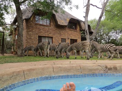 Photo for Safari on and from your private viewing deck. Enjoy the bush in Perfect Privacy!