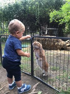 Photo for The farm: best friend for holidays with your children