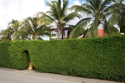 The Palm Beach Fortress, surrounded by 12ft high natural foliage