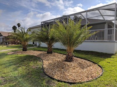 Some recent landscaping, new sylvester palms.