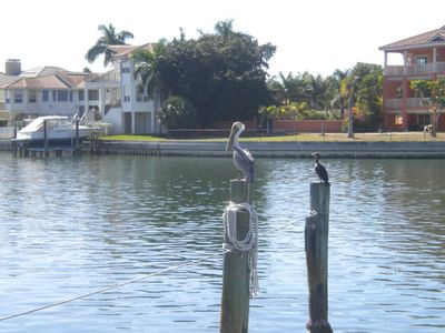 Pelicans and cormorants along the trails in the complex.