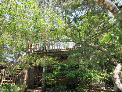 Photo for Treetop Oasis in the Heart of Fair Harbor, Fire Island
