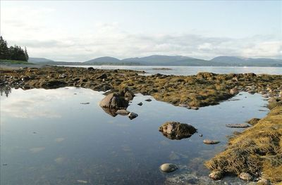 Tide pool on the beach with view of Cadillac mountain