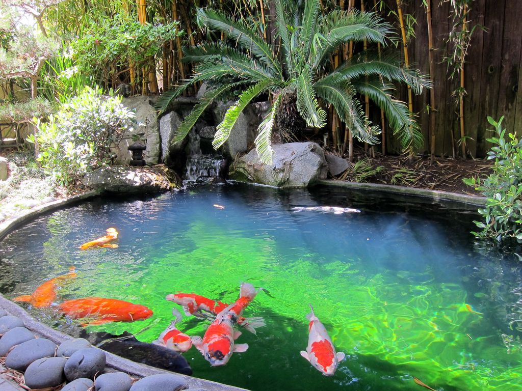 Tranquil koi pond and ocean views new bathroom hermosa - Peces tropicales fotos ...