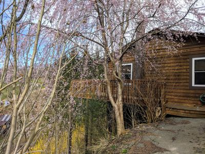 Photo for The Potter's Place - 2bd/2ba cozy cabin, mtn views