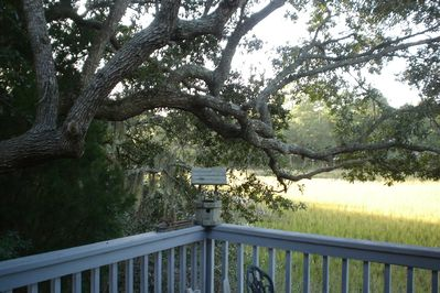 View from the deck where wildlife are seen