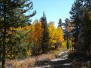Fall color on the ranch