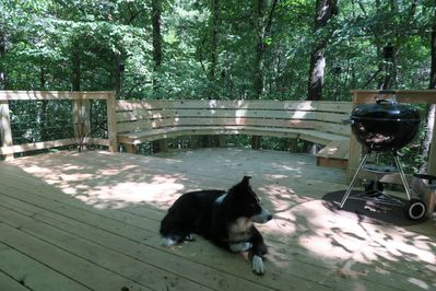 Our dog Jack enjoying the deck in front of the ATypical Cabin
