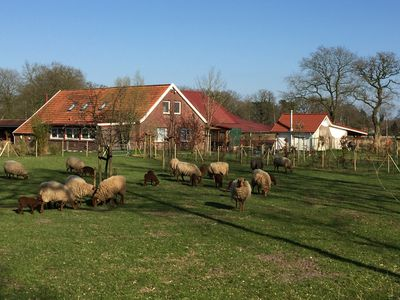Photo for Assisihof - A Naturidyll in East Friesland - Notkerwohnung