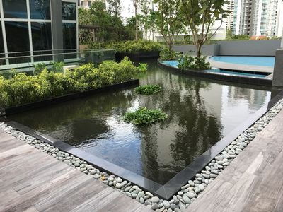 Pond with tropical water plants amidst running waters