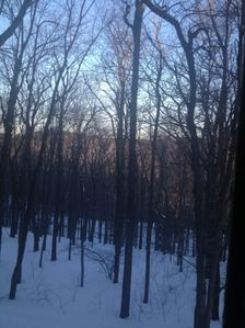 Winter View from Kitchen and Family Room