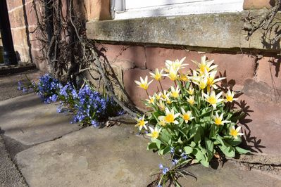 Spring flowers at the front of the cottage