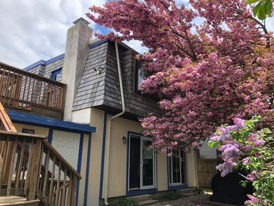 Photo for In-town Rehoboth! Walk everywhere!  ONLY 6 Summer '19 Nights Left (8/24 - 8/30)