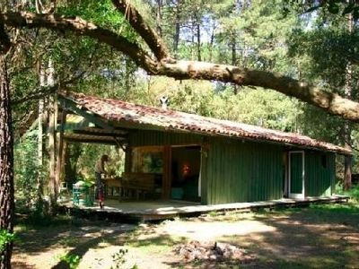 Photo for Charming wooden house in the heart of the Landes forest near Lake Hossegor