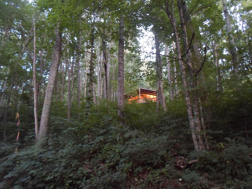 2017 01 tree house rentals in north carolina - Feels Like A Giant Tree House