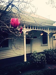 Photo for GOLDEN MILE 🌸 CANTERBURY COTTAGE