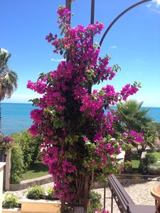 Photo for Beautiful Villa by the Mediterranean Sea, just 40 minutes outside Rome