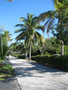 coconut lined street in front of home