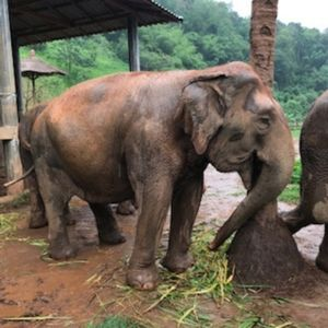 Photo for Walk with the Elephants and return to your 5 star cottage for the night