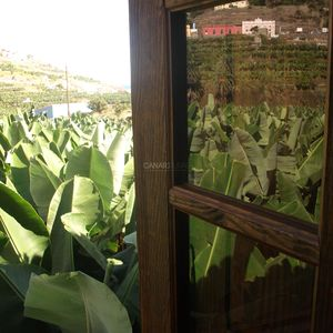 Photo for Charming Country house  Hermigua, La Gomera