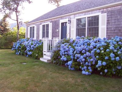 Front of the house with Hydrangeas in bloom