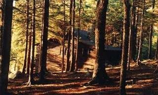 Cabin through the woods