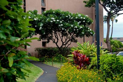Lush greenery at Maui Vista