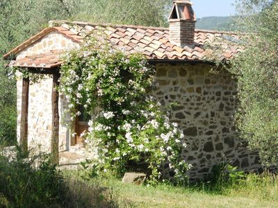 Photo for Casa Olivi, an ancient house in an olive grove of poetic beauty