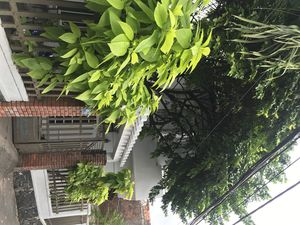Photo for TP garden house - Green house in center of a wonderful city