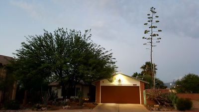 Photo for Lush Resort Style Oasis, Pet Friendly, Backyard Paradise With Pool.