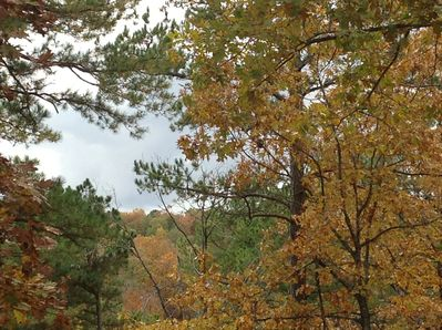 Great views of the woods from back deck.