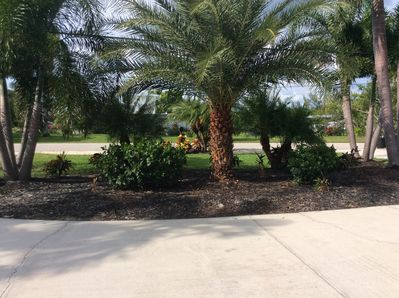 Beautiful  palm trees and shrubs in front of the house.