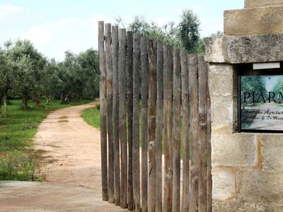 Photo for Salento rural residence immersed in an olive grove