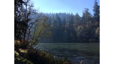 Photo for Kingfisher Cabin Right on the McKenzie River