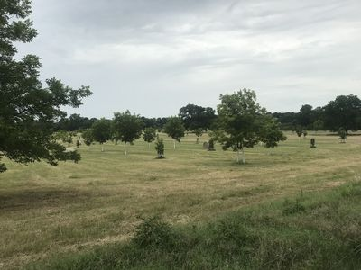 Ben Ranch Cabins located in a century old Pecan Orchard