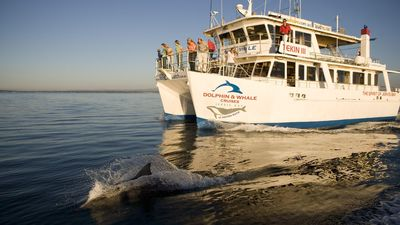 20% off Dolphin Watch Cruises when you stay