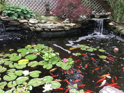 One of our favorite features – Koi pond from sitting area