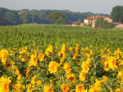 Photo for 2BR Chateau / Country House Vacation Rental in Lajatico, Toscana