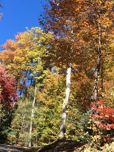 Photo for Perfect Timing!  Enjoy the Late Fall Colors in Gorgeous Mountain Home