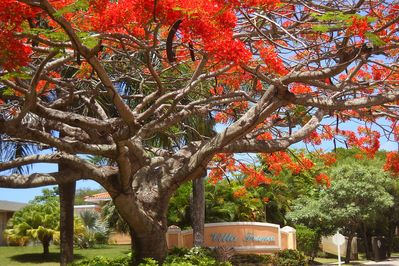 Entrance to Villa Franca Community, with blooming Flamboyan tree.