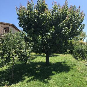 Photo for CASALE NONNA TERESA UMBRIA PET FRIENDS, WIFI, POOL NEARBY