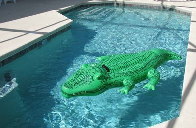 Take a Dip in the Pool to Cool Off Watch Out for the Alligator Taking a Swim!