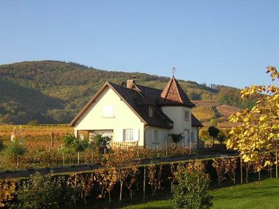 Photo for Beautiful cottage with beautiful views of vineyards in Ammerschwihr